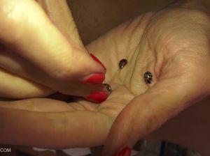 Извращенка впустила целую тучу жучков в свою бритую киску